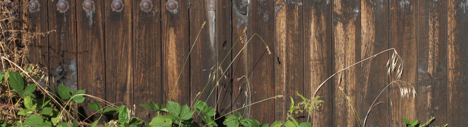 vitaly pienso natural para perros y gatos web