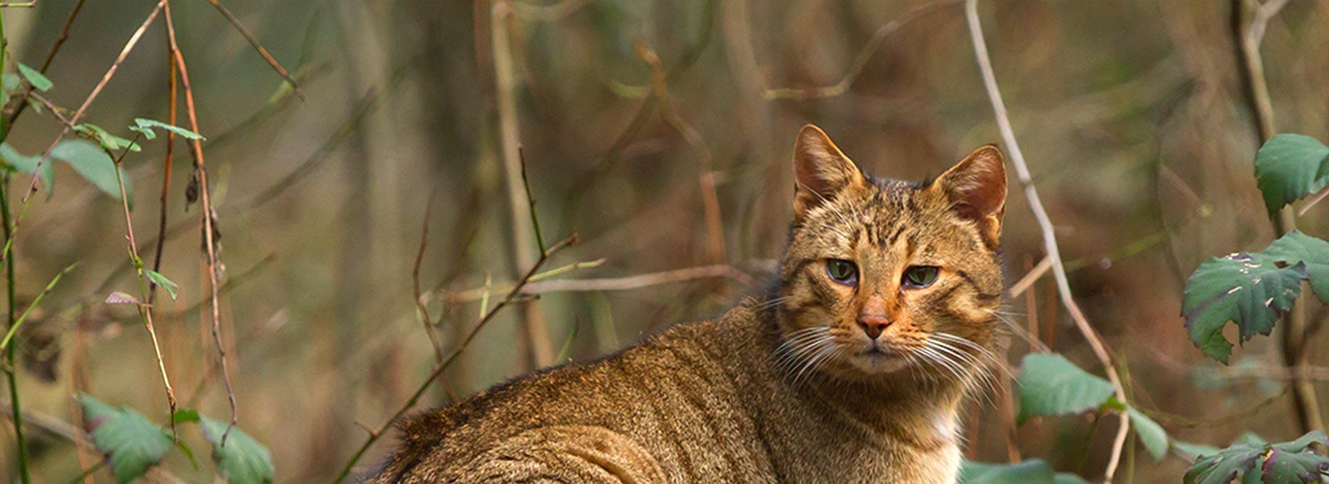 vitaly pienso natural de alta calidad para gatos slider