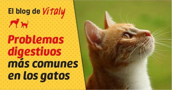 Problemas digestivos comunes en los gatos