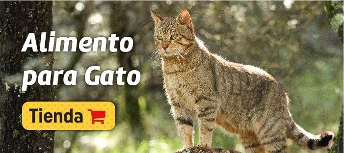 vitaly pienso natural para gato