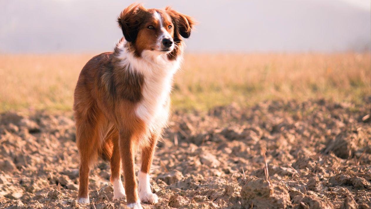 vitaly-pienso-perros-slider
